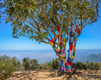 Yarnbombers Hiking Guide Yarnbombed Tree Cold Spring Trail